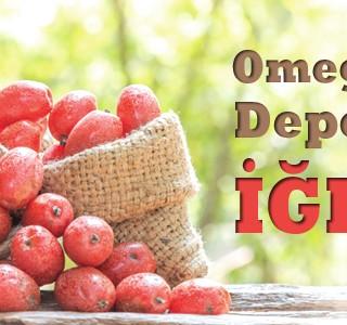 Omega 7 Deposu İğde