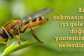 Arı Sokmasına İyi Gelen Doğal Yöntemler