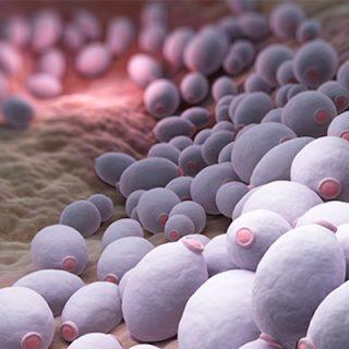 Kandida Mantarı Birçok Hastalığın Sebebi Mi?