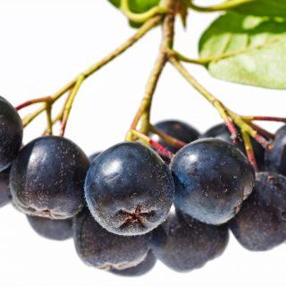 Aronya Meyvesi Nedir? Faydaları Nelerdir?